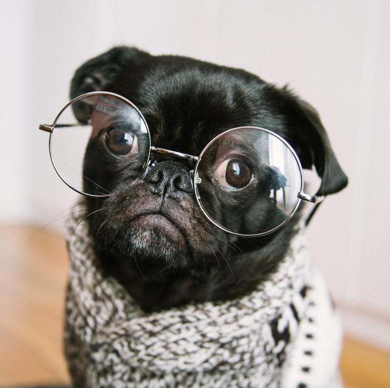 student pug